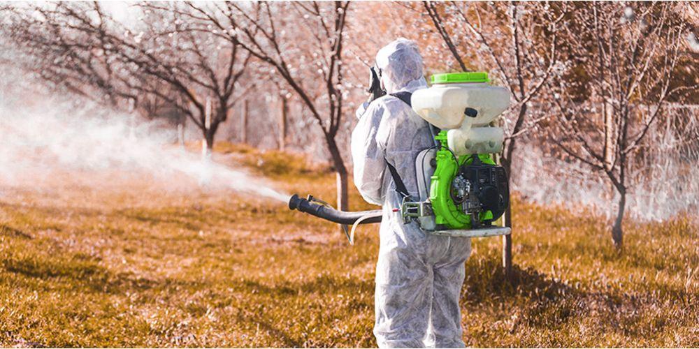 Как обработать плодовые деревья после сбора урожая? Особенности обработки сада