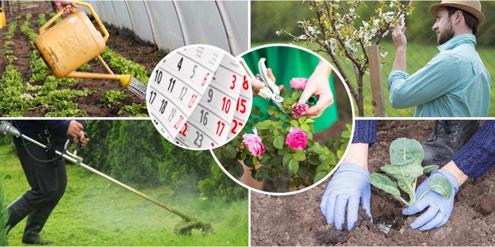 Календарь работ в саду, огороде и на газонах в июне-июле